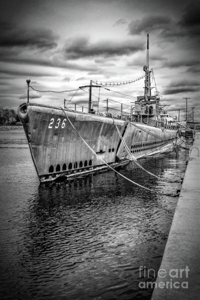 Photograph - Silversides by Nick Zelinsky