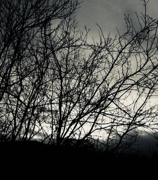 Photograph - Silvertone Tree Silhouette by Itsonlythemoon