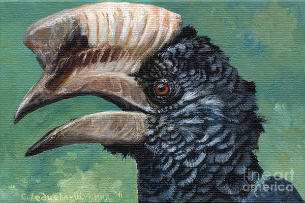 Hornbill Painting - Silvery-cheeked Hornbill by Svetlana Ledneva-Schukina