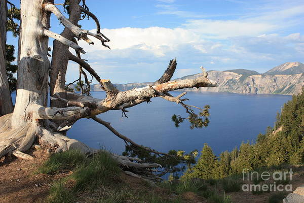 Photograph - Silvery Tree Over Crater Lake by Carol Groenen
