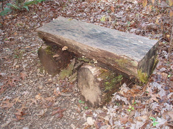 Photograph - Simple Bench by Allen Nice-Webb
