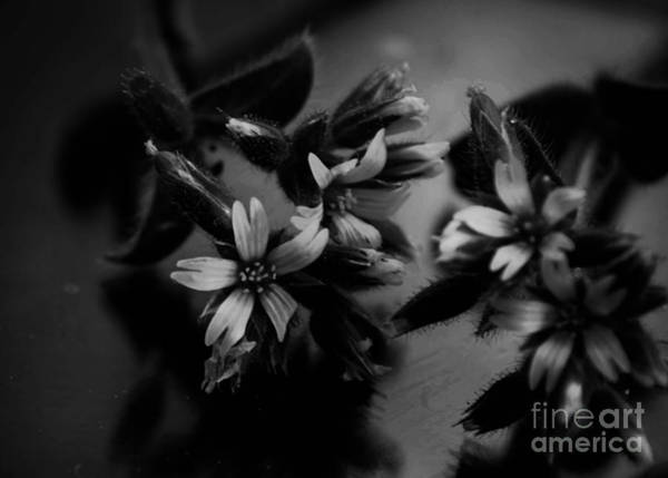 Photograph - Simple Black And White by Andrea Anderegg