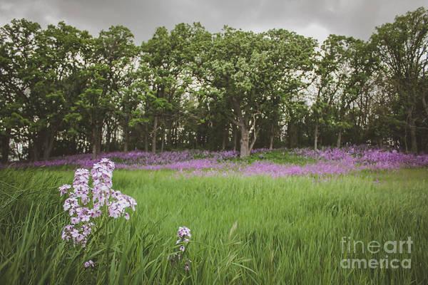Photograph - Simple Bliss by Viviana  Nadowski