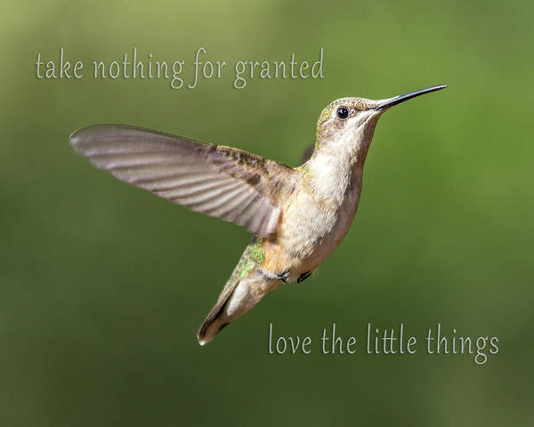 Beautiful Hummingbird Photograph - Simple Country Truths Hummingbird by Betsy Knapp