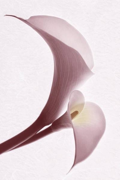 Photograph - Simple Grace by Leda Robertson