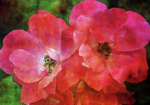 Photograph - Simple Roses 4268 Idp_2 by Steven Ward