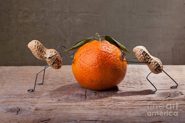 Bizarre Wall Art - Photograph - Simple Things - Antagonism by Nailia Schwarz