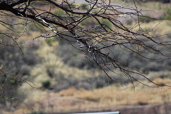 Photograph - Simplistic Beauty In Branches by Colleen Cornelius