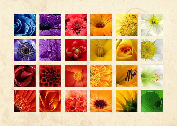 Wall Art - Photograph - Simply Flowers by Mark Rogan