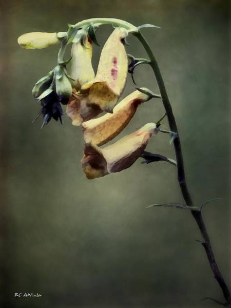 Painting - Simply Foxglove by RC DeWinter
