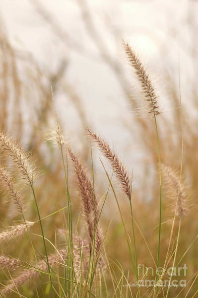 Photograph - Simply Grass by Vicki Ferrari