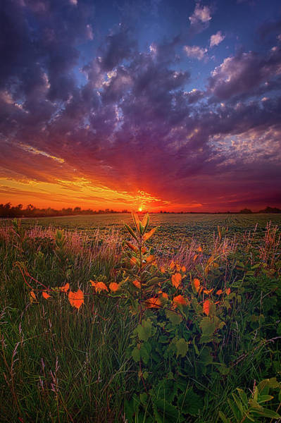 Wall Art - Photograph - Since The Dawn Of Time by Phil Koch