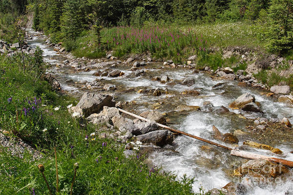Photograph - Sinclair Creek by Charles Kozierok