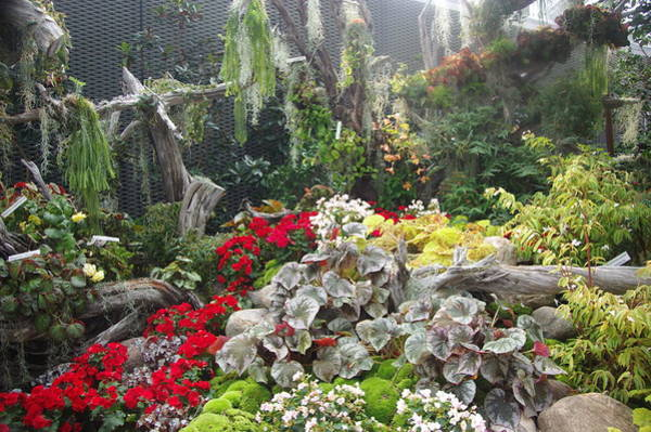 Photograph - Singapore Cloud Forrest 16 by Phyllis Spoor