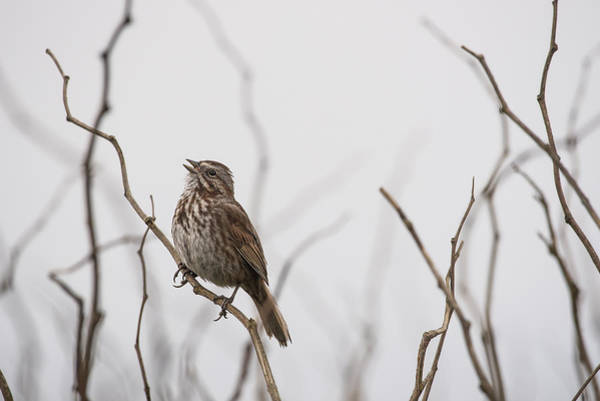 Photograph - Singing In Fog by Robert Potts