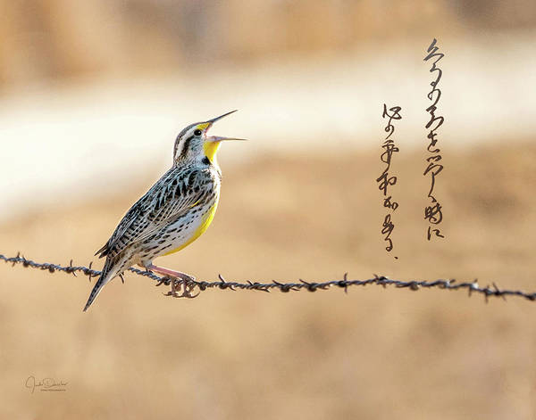 Photograph - Singing Meadowlark by Judi Dressler