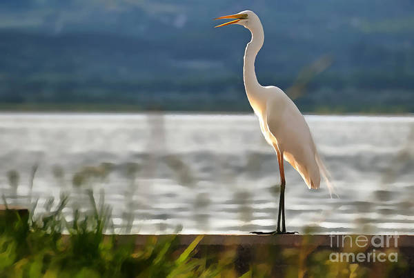 Painting - Singing White Egret by Odon Czintos