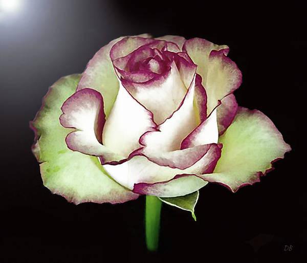 Mixed Media - Single Beautiful Rose by Dennis Buckman