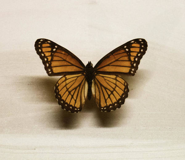 Realistic Photograph - Single Butterfly by Martin Newman