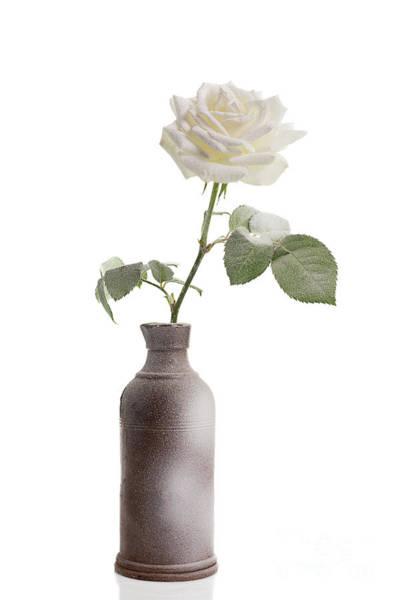 Wall Art - Photograph - Single Christmas Rose by Amanda Elwell