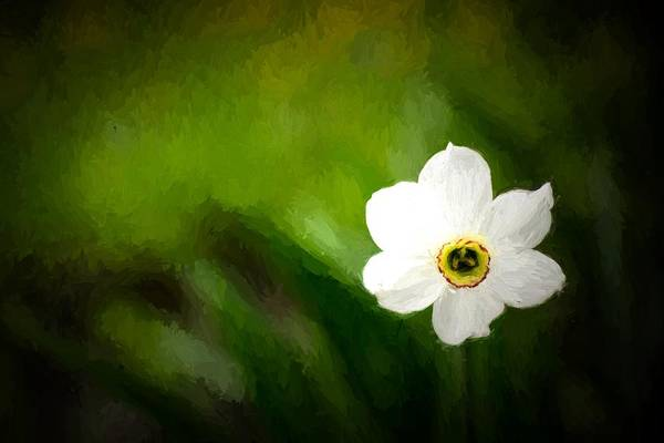 Photograph - Single Daffodil Coloured White In Bloom by John Williams