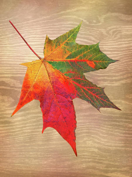 Photograph - Single Leaf Shades Of Autumn by Gill Billington