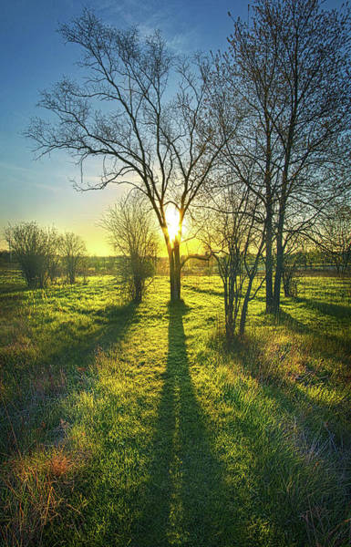 Photograph - Single Moments by Phil Koch