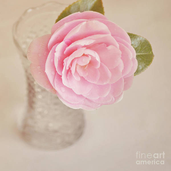 Camelia Photograph - Single Pink Camelia Flower In Clear Vase by Lyn Randle