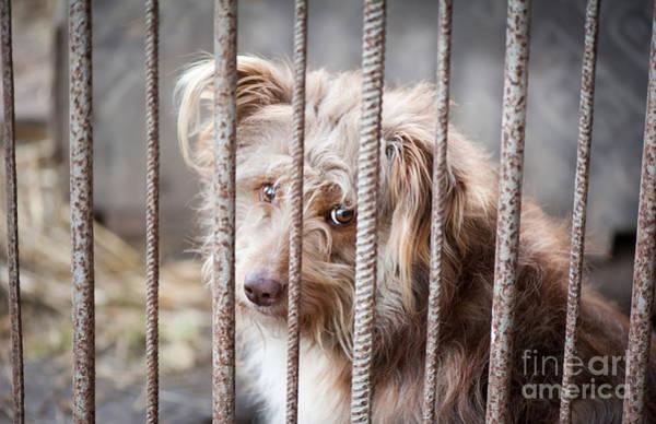 Wall Art - Photograph - Single Sad And Grim Little Dog by Arletta Cwalina