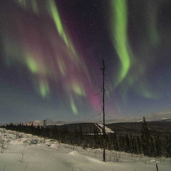 Photograph - Single Sentry Aurora by Ian Johnson