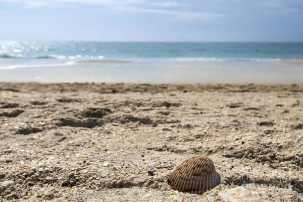 Photograph - Single Shell by Karin Pinkham