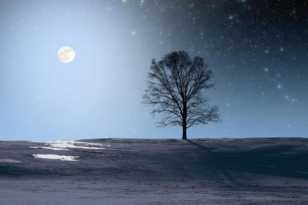 Photograph - Single Tree In Moonlight by Larry Landolfi