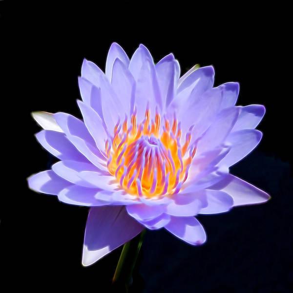 Photograph - Single Water Lily by Pamela Walton