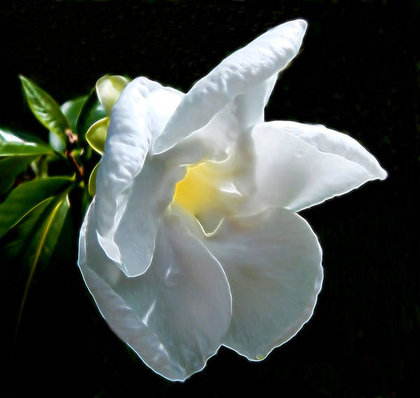 Mixed Media - Single White Flower by Pamela Walton