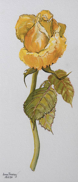 Single Rose Painting - Single Yellow Rose by Joan Thewsey