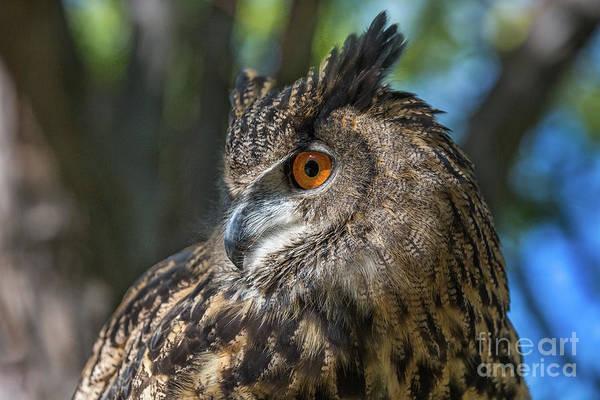 Photograph - Sir Wally Wildlife Art By Kaylyn Franks by Kaylyn Franks