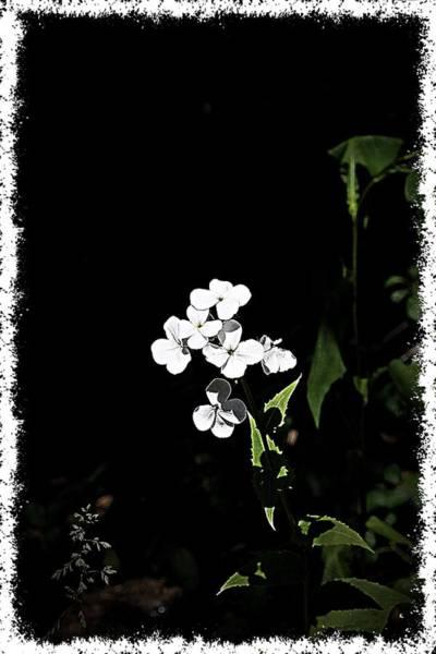 Photograph - Sister Light by Mario MJ Perron