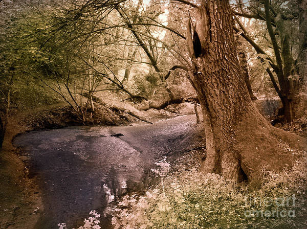 San Antonio Photograph - Sit And Dream Awhile by Laura Iverson