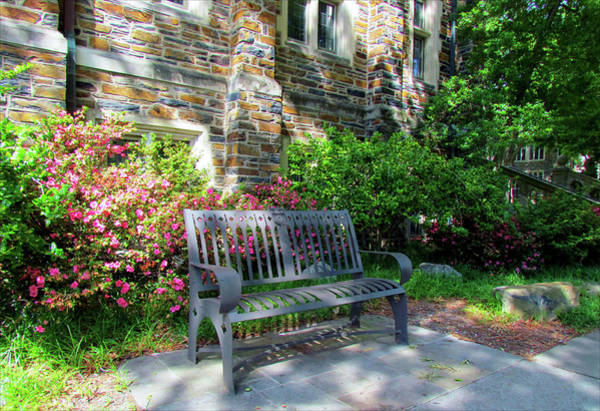 Photograph - Sit And Study by Cynthia Guinn