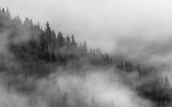 Photograph - Sitkas In The Tongass Mist by Rich Ackerman