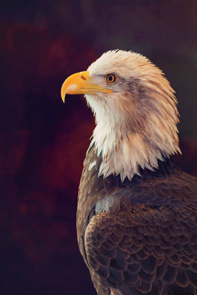 Wall Art - Photograph - Sitting For A Proud Portrait by Bill Tiepelman