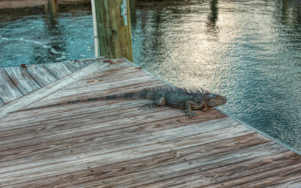 Photograph - Sitting On The Dock by John M Bailey