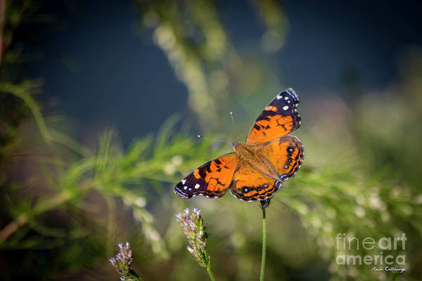 Photograph - Sitting Pretty 2 Painted Lady Butterfly Art by Reid Callaway