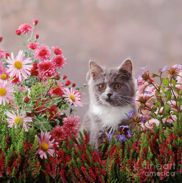 Photograph - Sitting Pretty Kitty by Warren Photographic