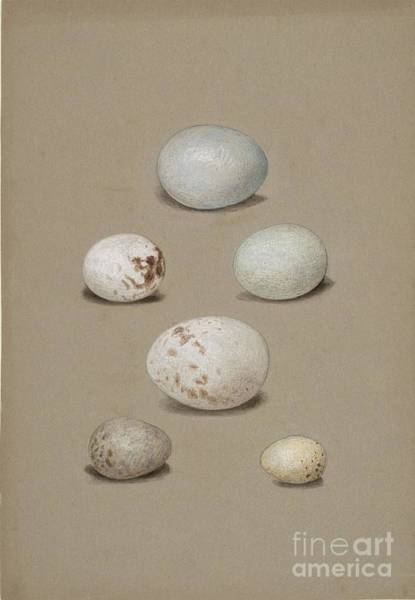 Painting - Six Bird's Eggs by Celestial Images