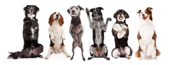 Wall Art - Photograph - Six Dogs Standing Forward Together Begging by Susan Schmitz