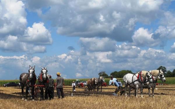 Southern Ontario Photograph - Six Horses by Ian  MacDonald