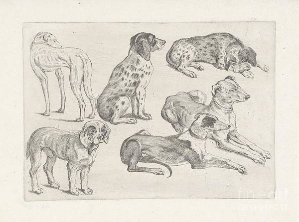 Painting - Six Hunting Dogs by Celestial Images