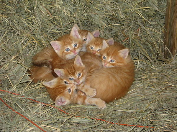 Photograph - Six Kittens by Keith Stokes