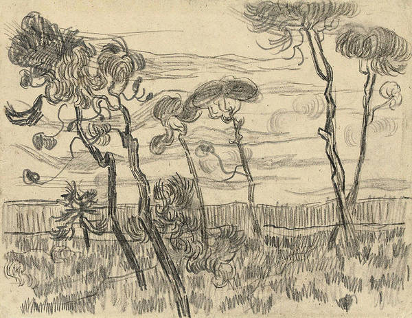 Pine Needles Painting - Six Pines Near The Enclosure Wall, 1889 by Vincent Van Gogh